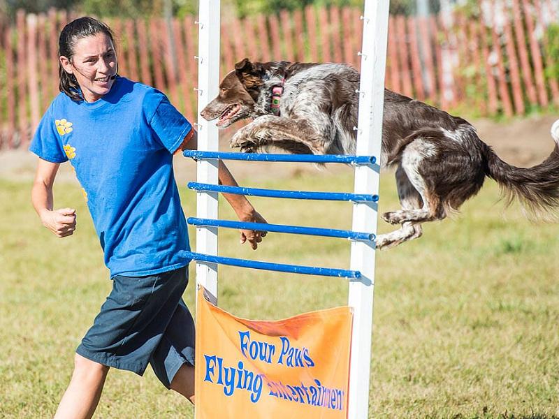 Erin Fair - Small Animal & Dog Shows
