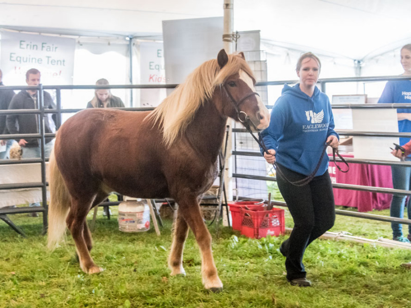 Horse Exhibits and Educational Clinics